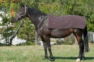 Der Rückenwärmer für Pferde - ein Wellnesseffekt